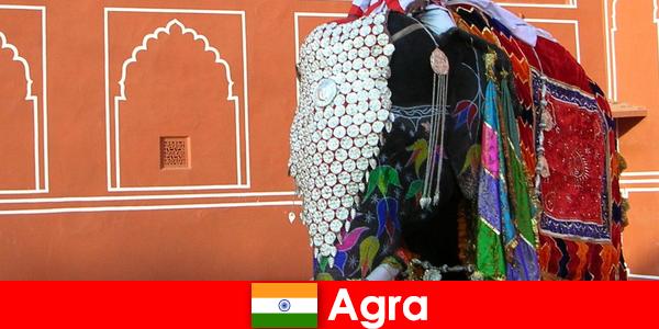 Les touristes de la nature à Agra aiment la variété des animaux