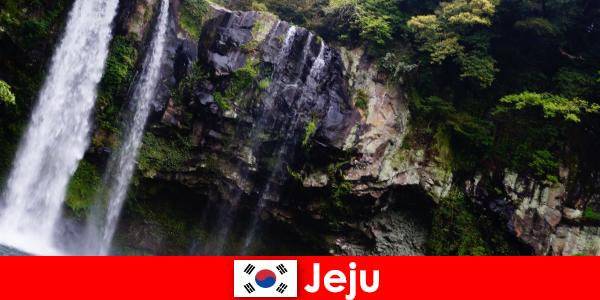 Jeju en Corée du Sud, l'île volcanique subtropicale aux forêts à couper le souffle pour les étrangers
