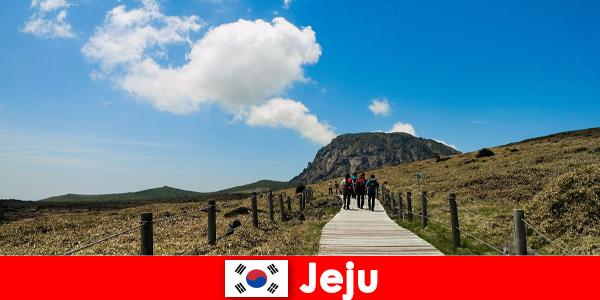 Les touristes marchent à travers le fantastique paysage naturel de Jeju en Corée du Sud