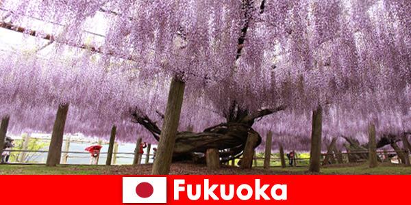 Voyages nature pour étrangers dans la nature intacte de Fukuoka Japon